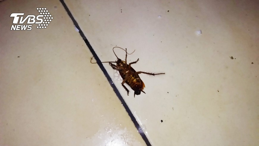 圖/中央社 滅蟑螂 用肥皂水有撇步