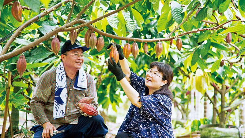 圖/商周 【商周】摸索10多年 可可樹在屏東生根了