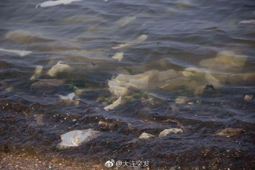 圖/大連突發微博 嘔!知名黑石礁岸飄「衛生棉海」 遊客狂吐:補血?