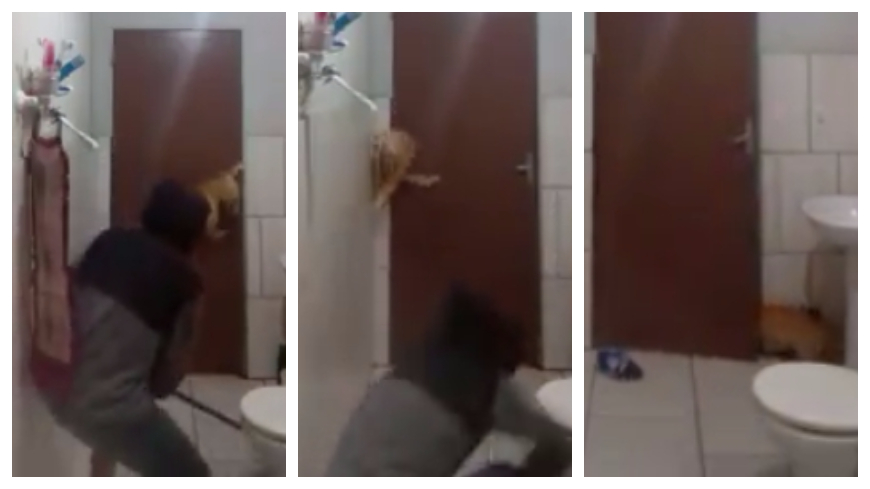 圖/翻攝自UNILAD臉書 笑噴!男子帶貓浴室捉老鼠 驚慌反應嘴角秒失守