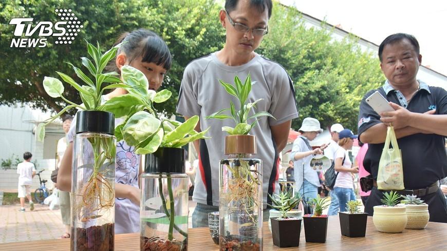 圖/中央社 菱角殼有妙用 高溫碳化可做植栽