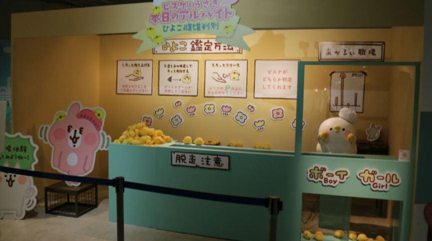 圖/飛躍提供、東映株式會社提供 人氣貼圖來台開展!超萌P助兔兔拍不完