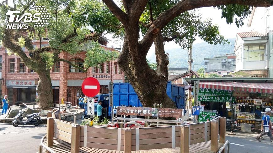 圖/中央社 深坑老街老樹病懨懨 修剪通風再現生機