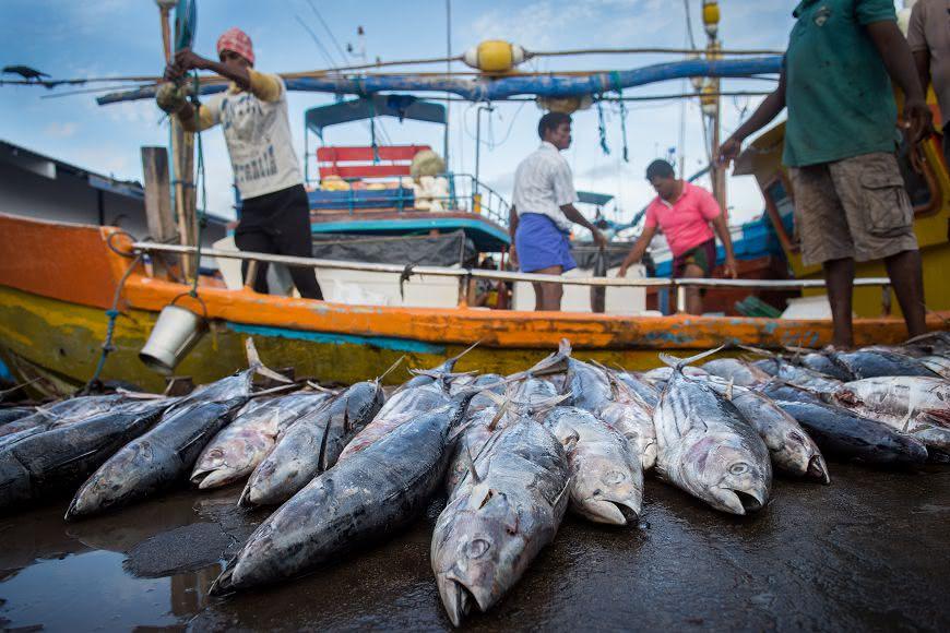 圖/TVBS 孕婦、小孩不能吃這些魚 當心重金屬「甲基汞」吃下肚!