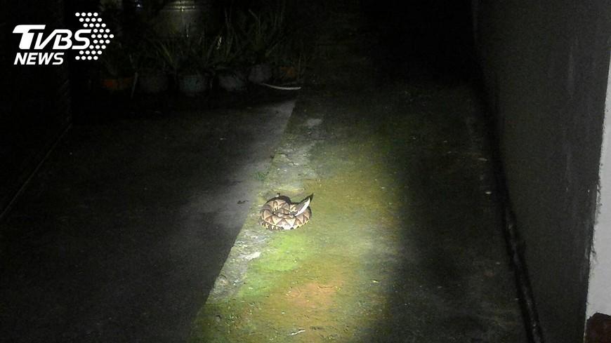 圖/中央社 原民神話百步蛇 盤據家屋前嚇壞人