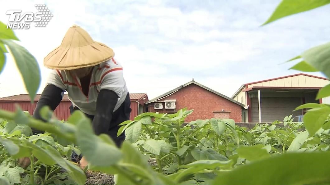 圖/TVBS 原民請領老農津貼降為55歲修法 立院付委審查