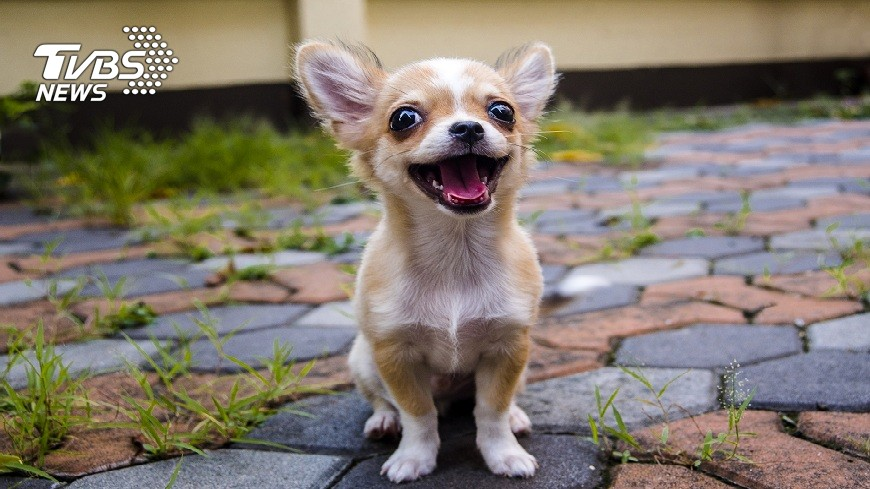 示意圖,非當事狗。圖/TVBS