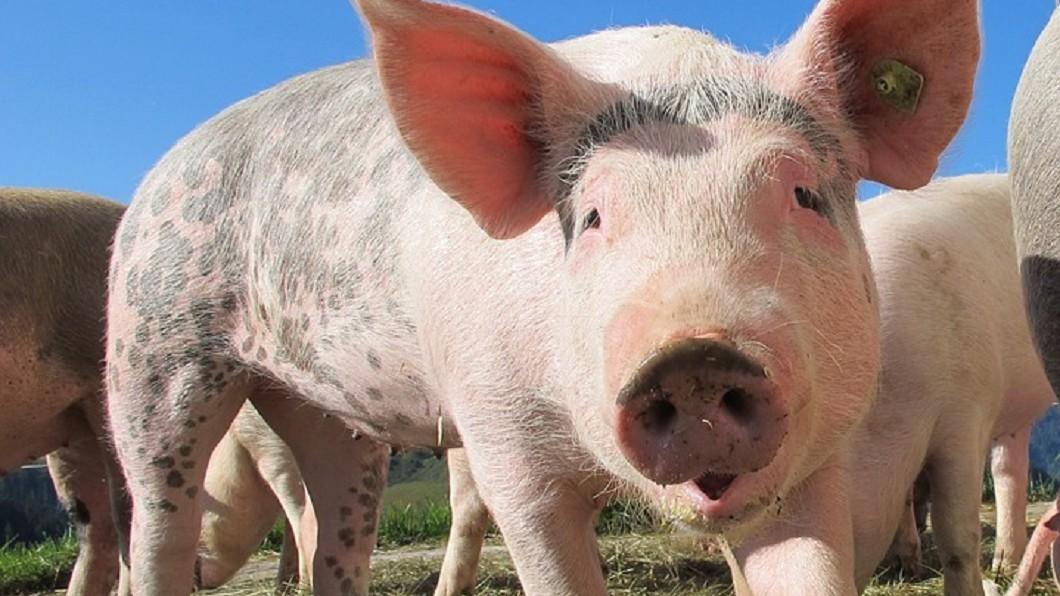 圖/Pixabay 真的hen令人崩潰!年度最有事的豬隊友就是他