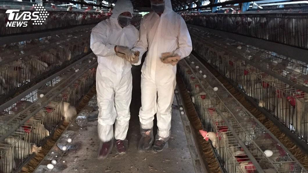 圖/中央社 雲林蛋雞場發生禽流感 今年確診達55例