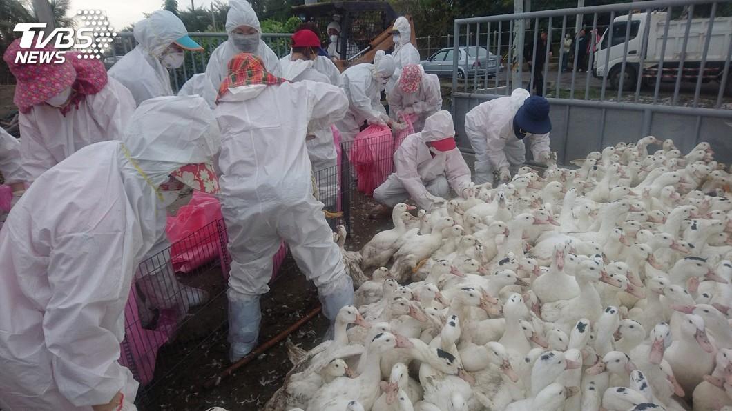 圖/中央社 製造禽流感動物偽藥 檢方聲押8人獲准