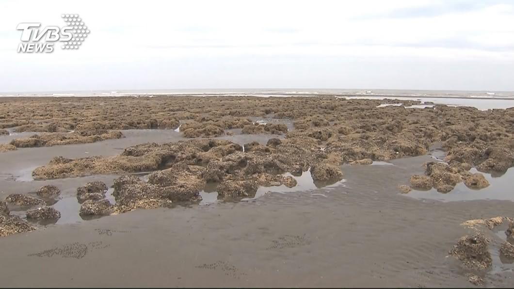 圖/TVBS 中油5月底前提藻礁因應對策 違反可依環評法開罰