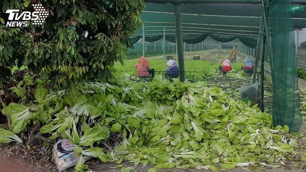 圖/中央社 農民立即傷害有保 職災險11月試辦有望