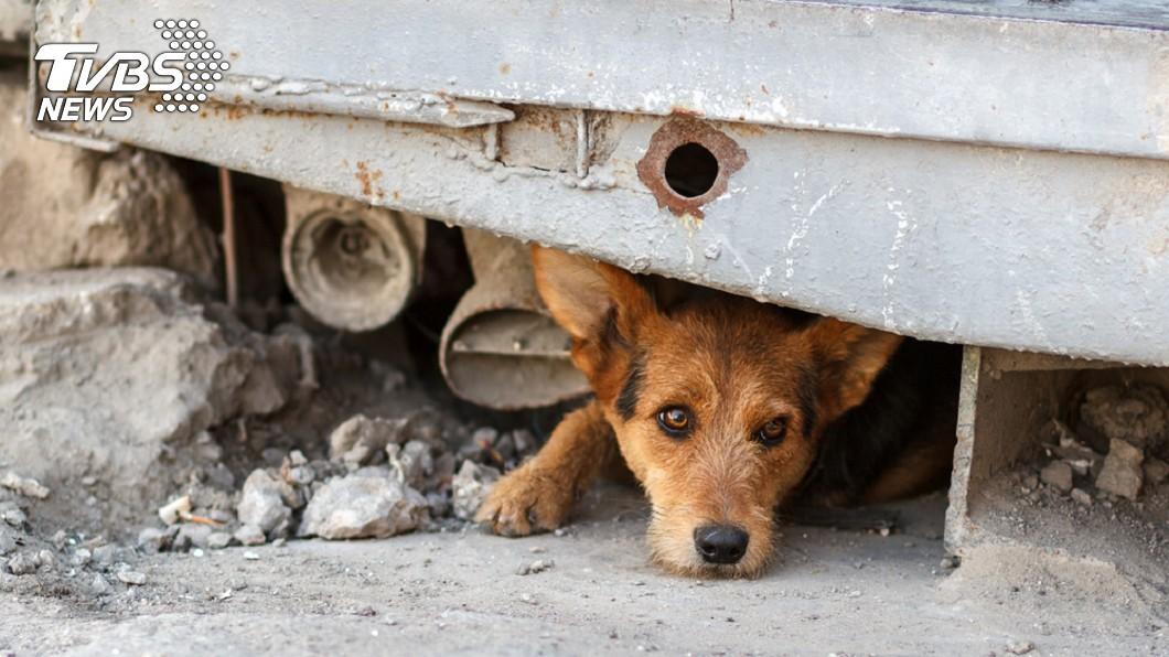 北市動物收容所去年安樂死比率為5.52%,高居六都之冠。示意圖/TVBS 柯P動物友善破功!北市去年安樂死179犬 比例冠六都