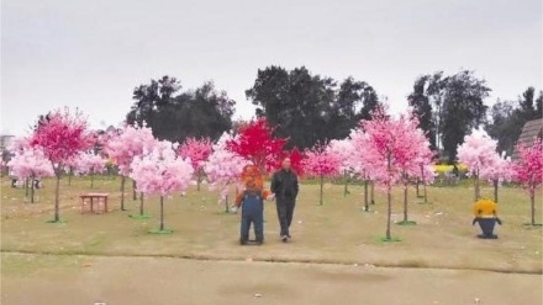 民眾抱怨現場滿滿的都是塑膠花。圖/翻攝自微博 陸「櫻花節」搞山寨 現場滿滿塑膠花氣炸遊客