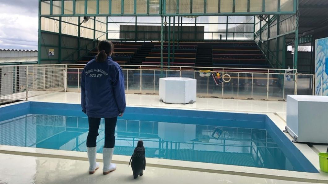 可愛的企鵝背影彷彿在說「今天又沒人來了!真的會有人來看我們嗎?」。圖/翻攝自推特