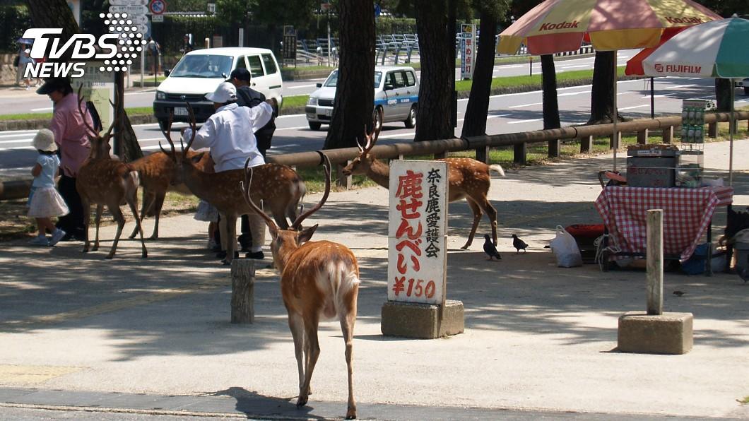 圖/中央社資料畫面 胃內塞滿塑膠袋… 日本奈良公園9隻鹿慘死