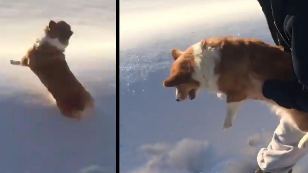 雪地反光讓人誤會。圖/翻攝IG 柯基遭扔出飛機?「重摔地面」影片萬人瘋傳