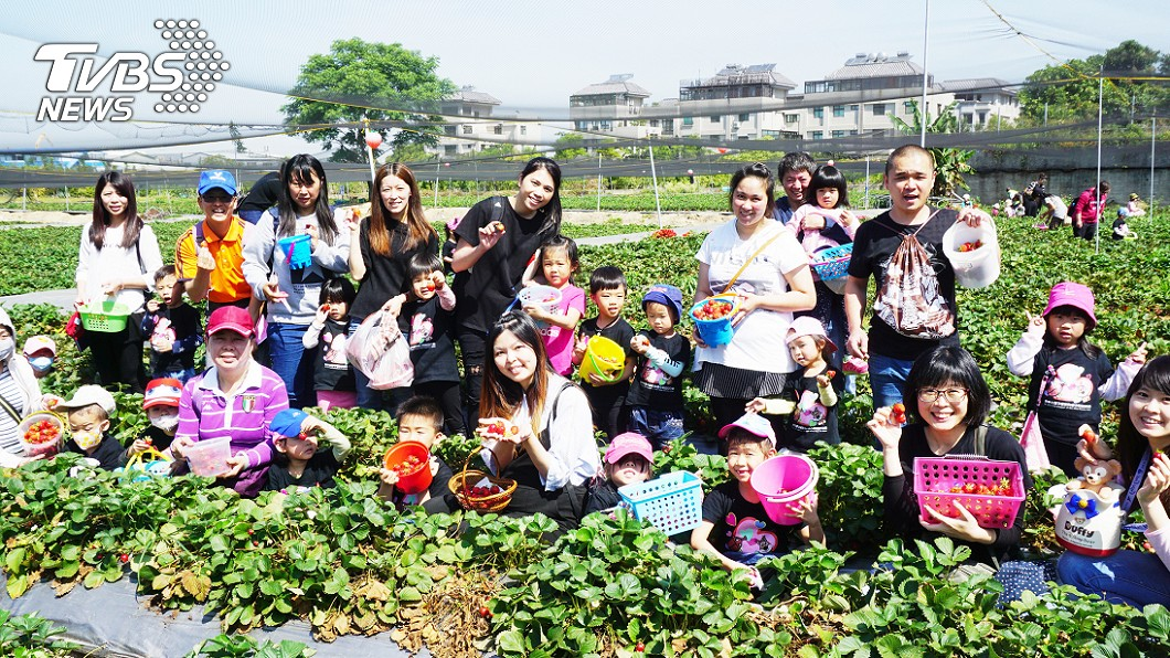 圖/中央社 甜美回憶 學童採草莓體驗田園生活