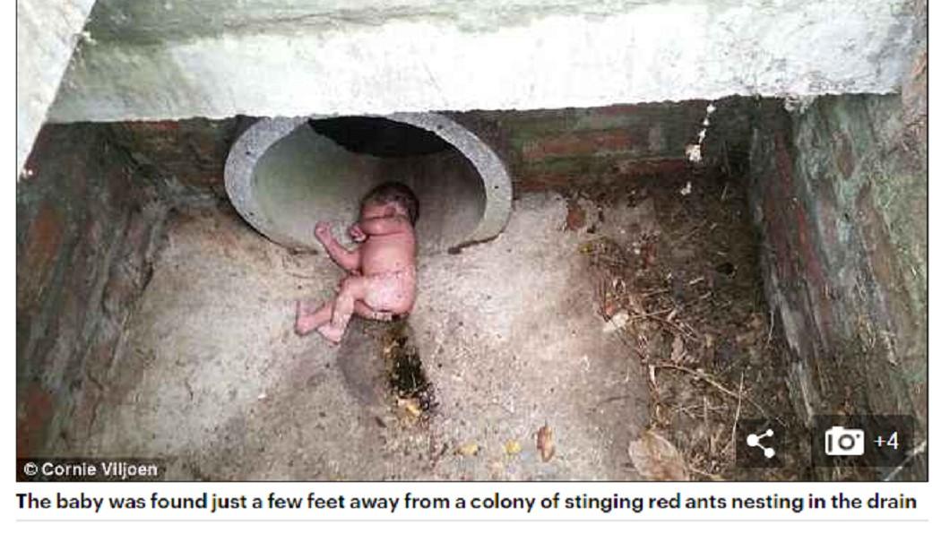 女嬰遭遺棄排水溝,且位置相當接近火蟻巢。圖/翻攝自 每日郵報 女嬰遭棄排水溝 躺紅火蟻巢旁奇蹟生還