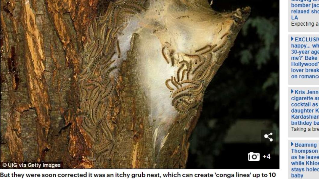 這種毛毛蟲的絲會引起過敏反應。圖/翻攝自英國每日郵報