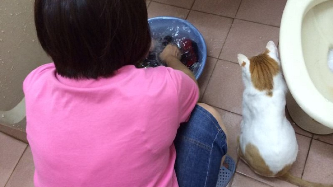 圖/翻攝自 Dcard 媽撂狠話「帶貓回來就丟掉」 結局超暖