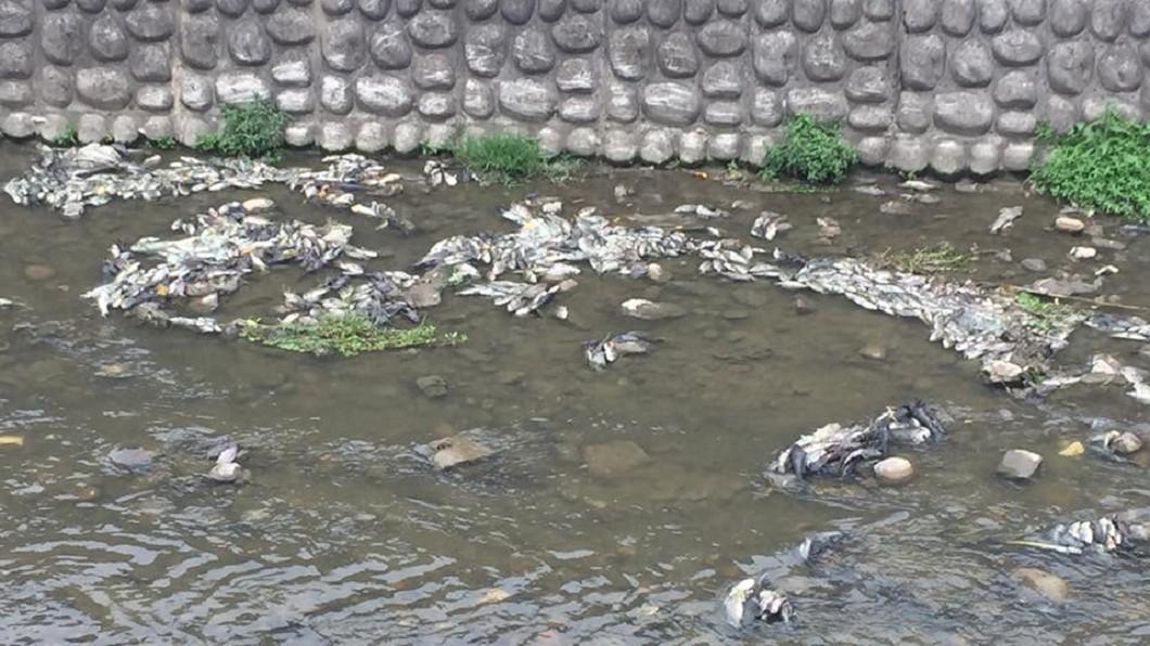 敬鵬大火廢水導致下游溪水近14噸魚隻暴斃。圖/翻攝自黃志杰臉書