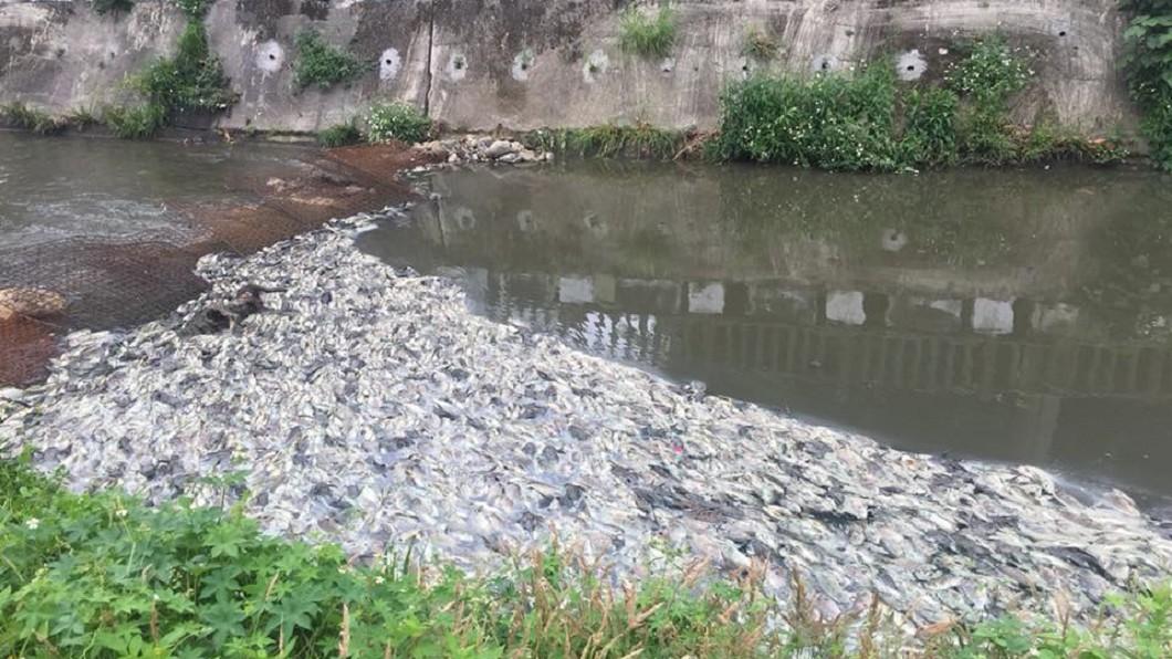 敬鵬大火廢水導致下游溪水近14噸魚隻暴斃。圖/翻攝自黃志杰臉書 敬鵬火災廢水比檸檬汁還酸 排入溪近14噸魚暴斃