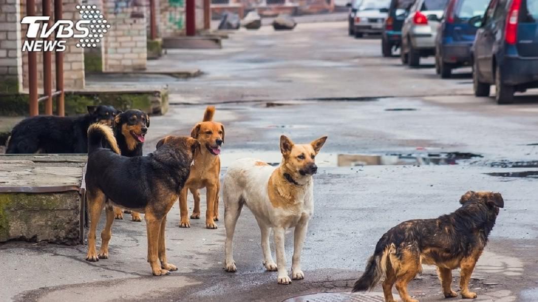示意圖,與本文無關。圖/TVBS 悚!1歲童溜出家門 慘遭5野狗撕咬拖行6米