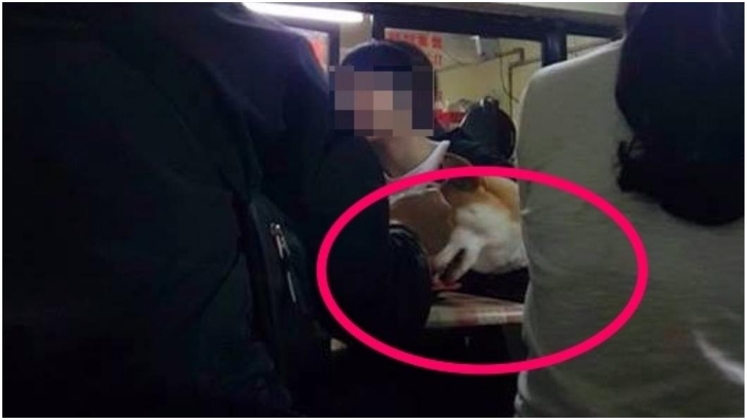 圖/爆怨公社 讓狗舔盤、拿筷餵食! 帶狗上餐聽被罵「沒水準」
