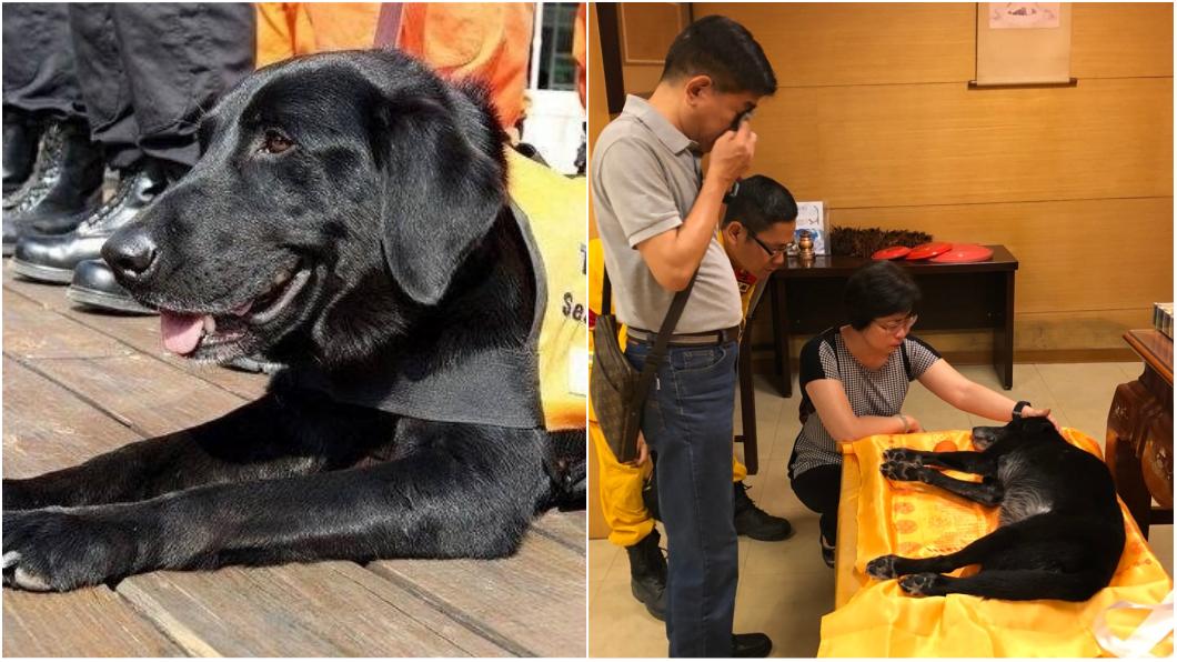 圖/台北市消防局 任務結束!八八風災搜救犬逝世 消防員淚眼道別…