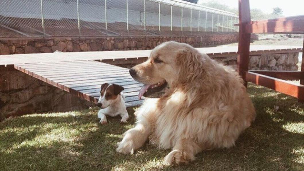 巴西第一家庭的2隻愛犬,皮科里(左)與索爾(右)。圖/翻攝自marcelatemer的IG