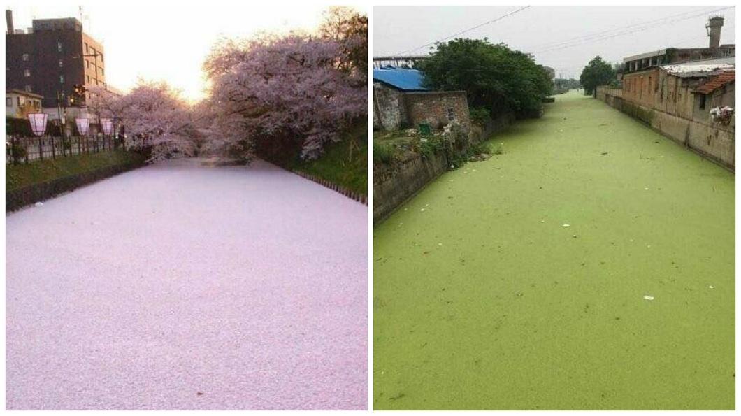日本有櫻花河,大陸網友也不甘示弱,分享當地秘境抹茶河。(圖/翻攝自微博) 日本「櫻花河」超美 陸網友分享秘境「抹茶河」
