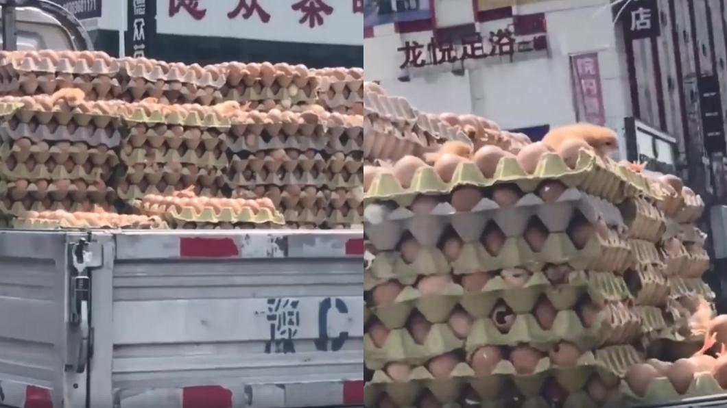 圖/翻攝自臉書 熱瘋!貨車載蛋熱到「孵出小雞」 網驚:下面的怎麼辦?