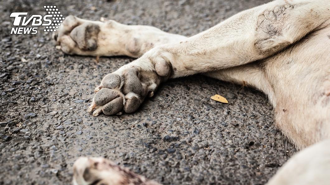 示意圖/TVBS 司機撞死狗沒救牠 被判肇逃吊扣駕照1個月