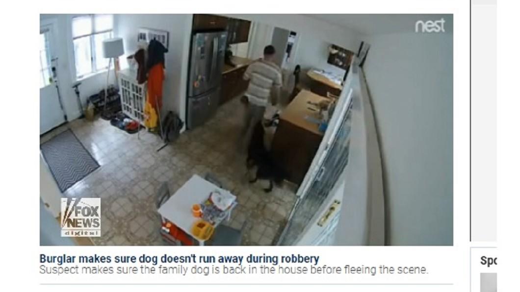 圖/翻攝自Fox News 史上最糟看門狗! 小偷上門牠搖尾相迎