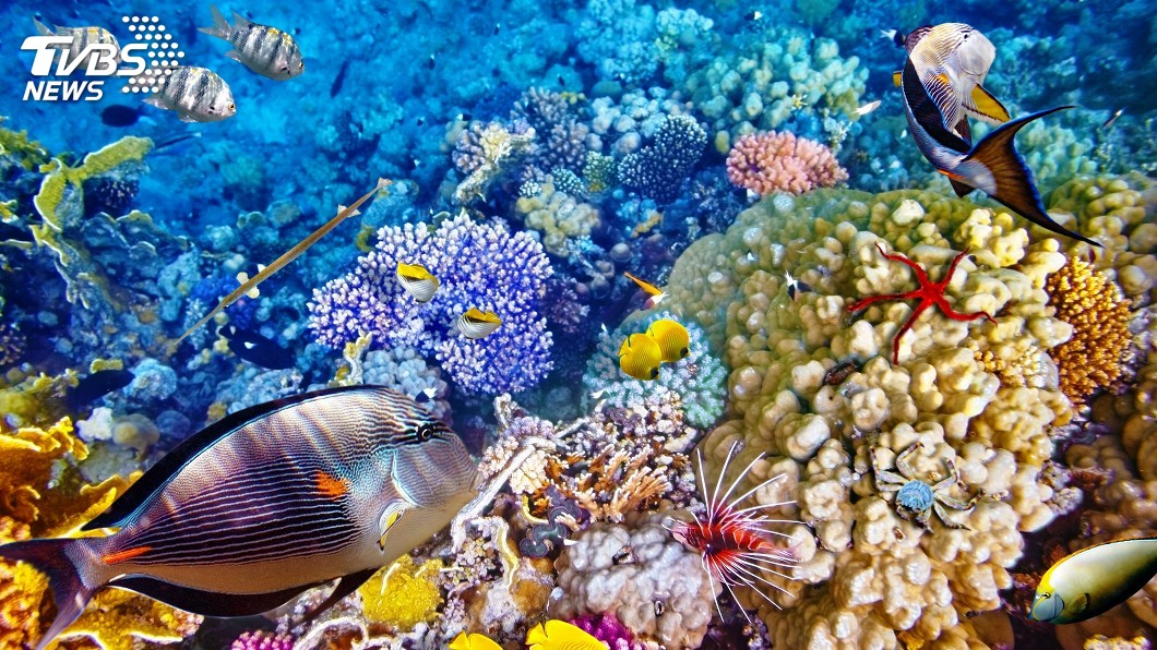 示意圖/TVBS 海水變暖變酸 澳洲大堡礁生存受威脅