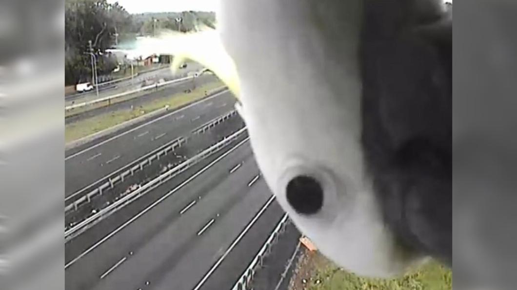 圖/翻攝自臉書 牠在監視器前狂「自拍」 網笑:主人派來擋超速的