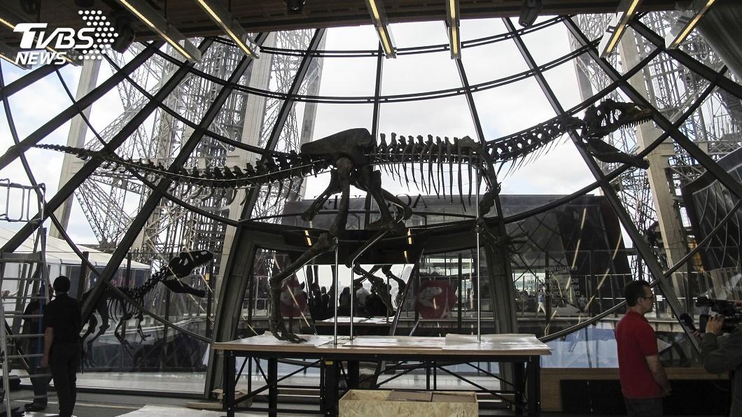 圖/達志影像美聯社 罕見品種恐龍骸骨拍賣 近7千萬元落槌