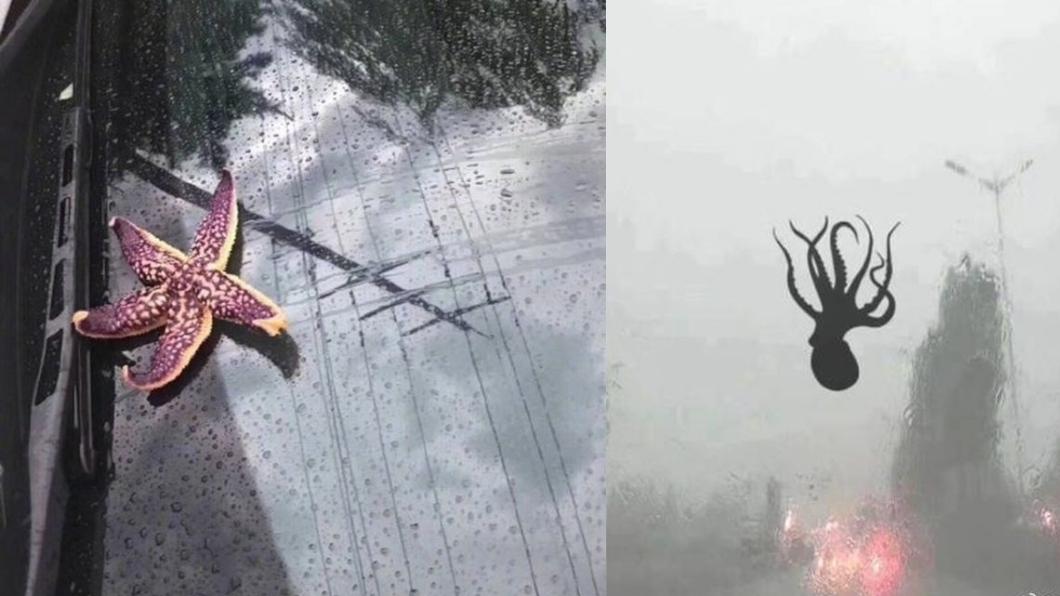 圖/翻攝自微博@大綿羊BOBO 章魚飛天、雨刷掛蝦 「seafood暴雨」降青島