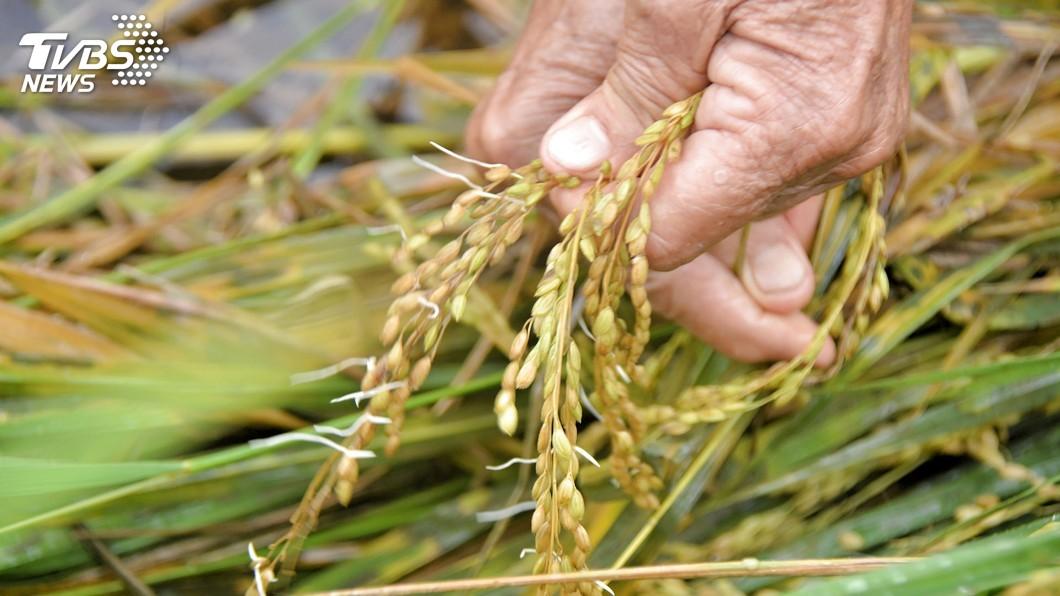 圖/中央社 推動農業保險 農委會拚本會期送立院審議