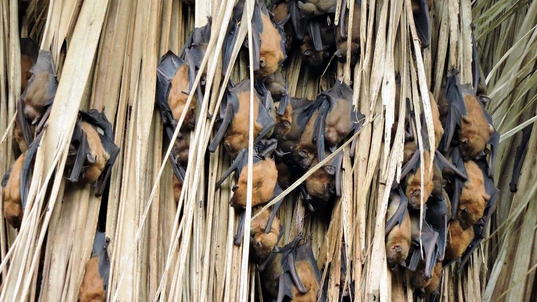 圖/嘉義林管處提供 暑期遊鰲鼓 親子透過直播觀賞蝙蝠睡姿