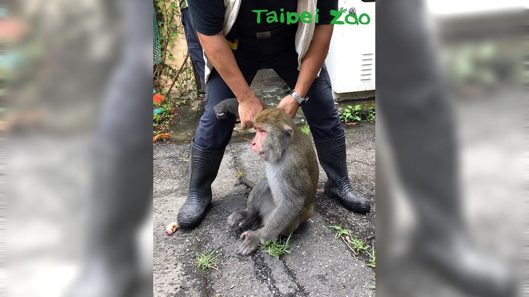 圖/翻攝自台北市立動物園網站