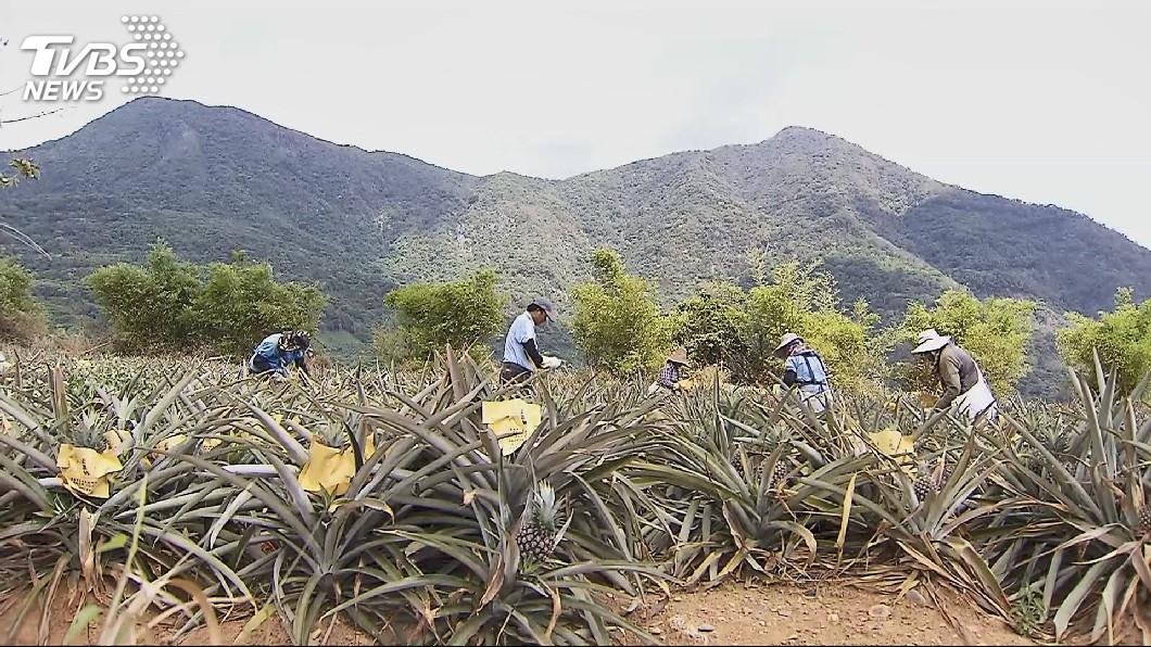 圖/TVBS 穩定水果價格 賴揆要農委會檢討產銷失衡原因
