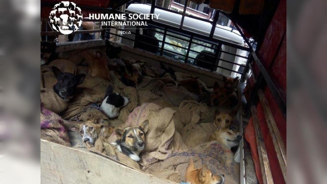 圖/翻攝自Humane Society International-India臉書 連抬頭都沒力氣…36狗被塞布袋送屠宰 動保員成功攔截