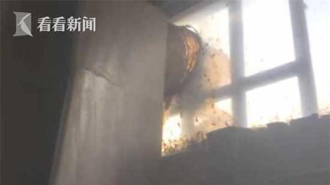 窗戶外面還有許多蜜蜂陸續飛入民宅內。(圖/翻攝自看看新聞)
