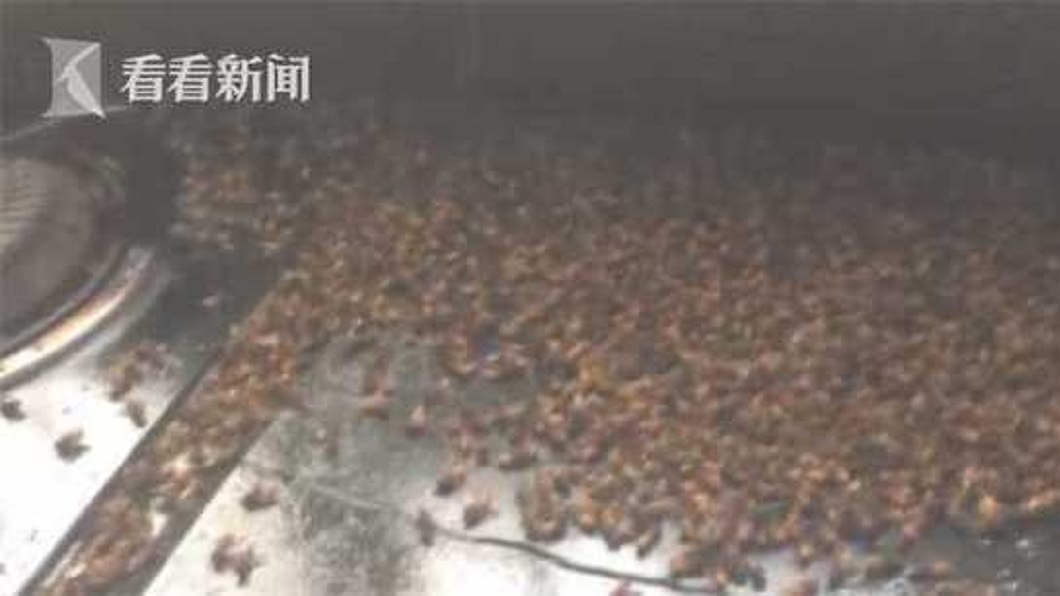 河南一戶人家突然遭蜜蜂群襲擊。(圖/翻攝自看看新聞) 夫護妻打死30隻蜜蜂 隔天上萬隻兄弟來「報仇」