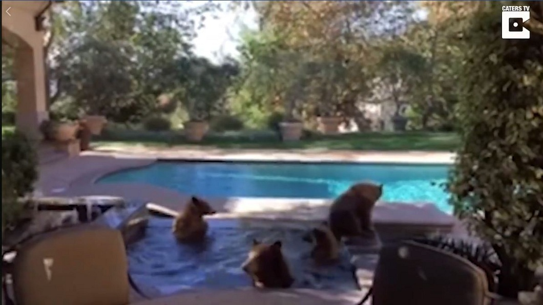 美國有一戶民宅每到夏天時,就有黑熊家族闖入開泳池趴。(圖/翻攝自臉書粉絲團) 把民宅當避暑山莊 黑熊家族連10年到他家開泳池趴
