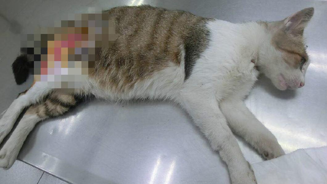 不少網友揚言絕對不原諒狠心虐貓的人士。(圖/台北市支持流浪貓絕育計劃協會提供)