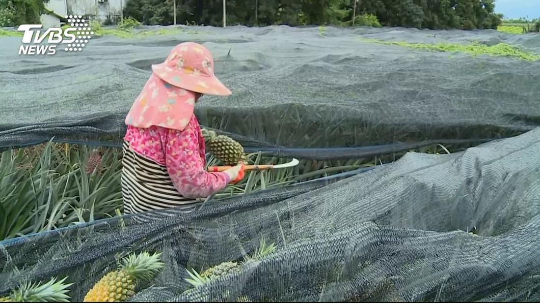 圖/TVBS 11月起試辦農民職災保險 每月僅須繳交15元
