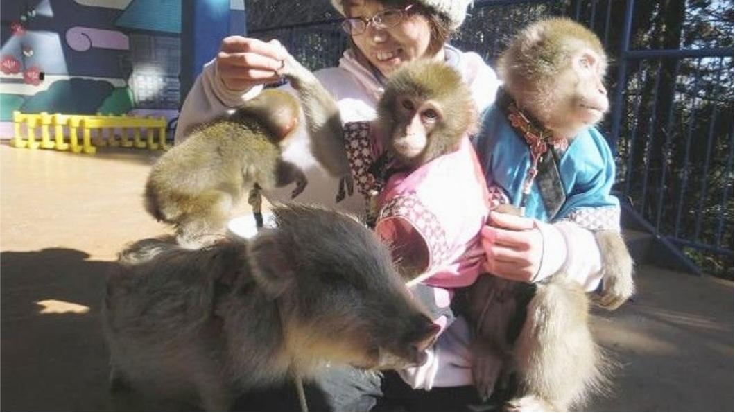 圖/翻攝twitter 哭哭!動物園沒人去 恐將動物「全部安樂死」